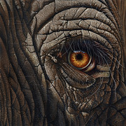 Wildlife Art Painting Posters - Elephant Eye Poster by Jurek Zamoyski