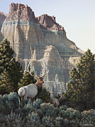 Elk Horns Painting Framed Prints - Elk at Cathedral Rock Framed Print by Mike Stinnett