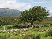 Faerie Photos - Faerie Tree Connemara by John Burnett