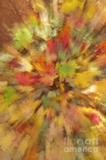 Sandra Bronstein - Fall Leaves Abstract