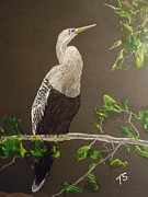 Anhinga Paintings - Female Anhinga by Terry Sussman