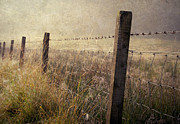 Jenny Rainbow - Fence and Field. Trossachs National...