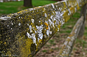 Split Rail Fence Photos - Fence Life by Susan Herber