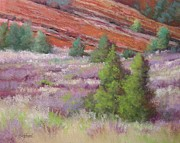 Green Grass Pastels Originals - Field at Red Rock by Paula Ann Ford
