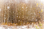 Jenny Rainbow - First Snow. Snow Flakes I