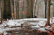 Suzanne Gaff - First Snowfall - A Walk in the Woods
