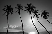 Pierre Photo Prints - Five coconut palms Print by Pierre Leclerc