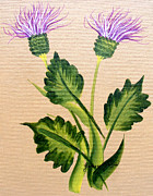 Barbara Griffin - Flowering Thistle