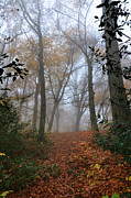 Autumn Colours Photos - Fogy Forest In The Morning 3 by Bruno Santoro