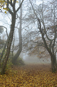 Autumn Colours Photos - Fogy Forest In The Morning by Bruno Santoro