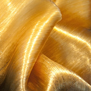 Folding Gold Fine Art Print by Artist and Photographer Laura Wrede