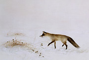 Jane Neville  - Fox in Snow