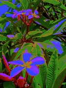 Pop Art Art - Frangipani Tree 6 by Nina Kaye