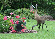 Sandhill Crane Posters - Garden Visitors Poster by Carol Groenen