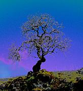 JoAnn SkyWatcher - Ghost Tree
