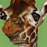 Giraffe Paintings - Giraffe by Jurek Zamoyski
