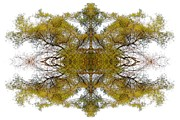 Kaleidoscope Photos - Gold Dust by Debra and Dave Vanderlaan
