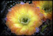 Saija  Lehtonen - Golden Cactus Bloom