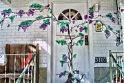 Florida House Photo Originals - Grape Vine by Sue Karski