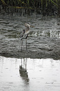 Suzanne Gaff - Great Blue Heron - Low Tide