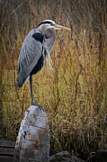 Debra and Dave Vanderlaan - Great Blue Heron on Spool