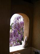 Yvonne Ayoub - Greece Wisteria through Arched Window