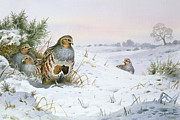 Carl Donner - Grey Partridge