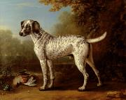 John Wootton - Grey spotted hound