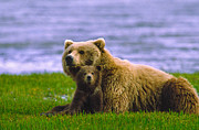 Boyd E Norton and Photo Researchers - Grizzly Bear with Cubs
