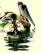 Brown Pelican Prints - Grocery Shopping Print by Joe JAKE Pratt