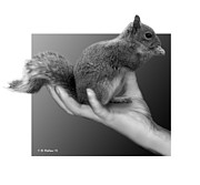Fx Framed Prints - Hand Full of Squirrel Framed Print by Brian Wallace