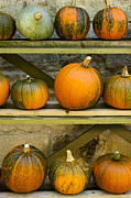 Anne Gilbert - Harvest Display