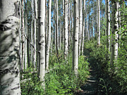 Beaver Digital Art - Hiking Through Aspens at Beaver Creek by James Woody
