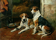 John Emms - Hounds in a Stable Interior