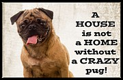 Edward Fielding - House is not a home without a crazy pug