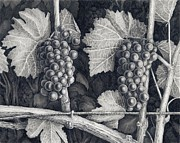 Vineyard Drawings Prints - Huddle Before Play Print by Mark Treick