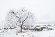 Lone Tree Prints - I Am Cold Print by Jose Medina