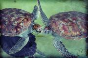 I Kissed A Turtle And I Liked It Fine Art Print by Ariane Moshayedi