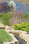 Dogwood Lake Prints - In the Garden Print by Carolyn Fox