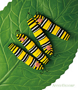 Monarch Posters - Inch Worms Poster by Anne Geddes