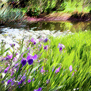 Garden Landscape Photo Posters - Iris and Water Poster by Linde Townsend