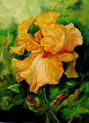 Diane Kraudelt - Iris In Bloom 4