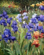 Impressionism Oil Paintings - Irises in the Sun by Roelof Rossouw
