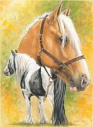 Irish Cob Fine Art Print by Barbara Keith