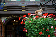 Disney Bear Photos - Just Hanging Around Bear by Thomas Woolworth