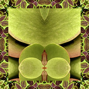 Ally Framed Prints - Kalanchoe Ally Framed Print by Bell And Todd