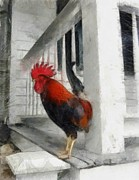 Michelle Calkins - Key West Porch Rooster