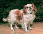 George Sheridan Knowles - King Charles Spaniel