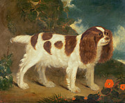 William Thompson - King Charles Spaniel