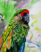 Parrot Paintings - Kiowa by Maria Barry